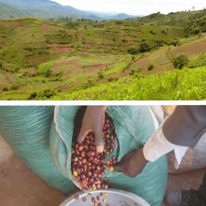 マラウイのコーヒー生産地