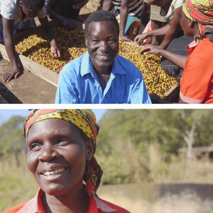 マラウイのコーヒー生産者